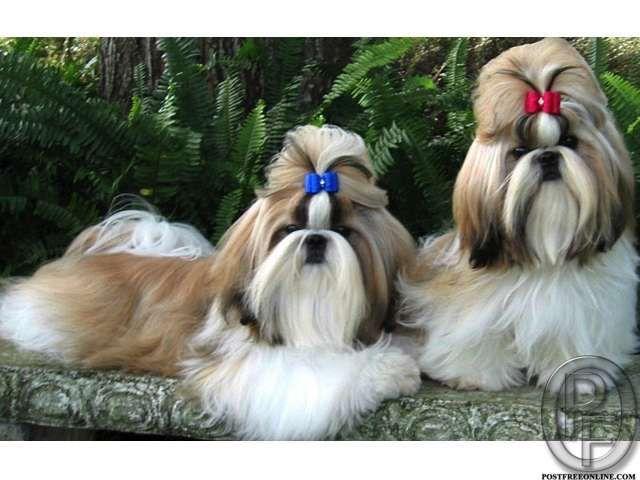 Dogs In Mumbai Maharashtra India In Pet Animals And Accessories