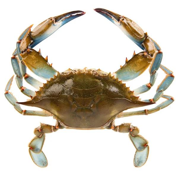 Blue Crab Google Search Crab Blue Crab Blue