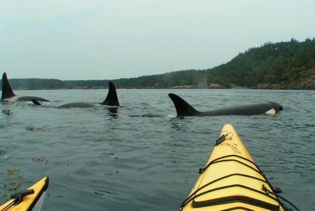You Can Even Watch Whales As They Pass Along The Coast Of Victoria Canada San Juan Islands Washington Orcas Island San Juan Islands