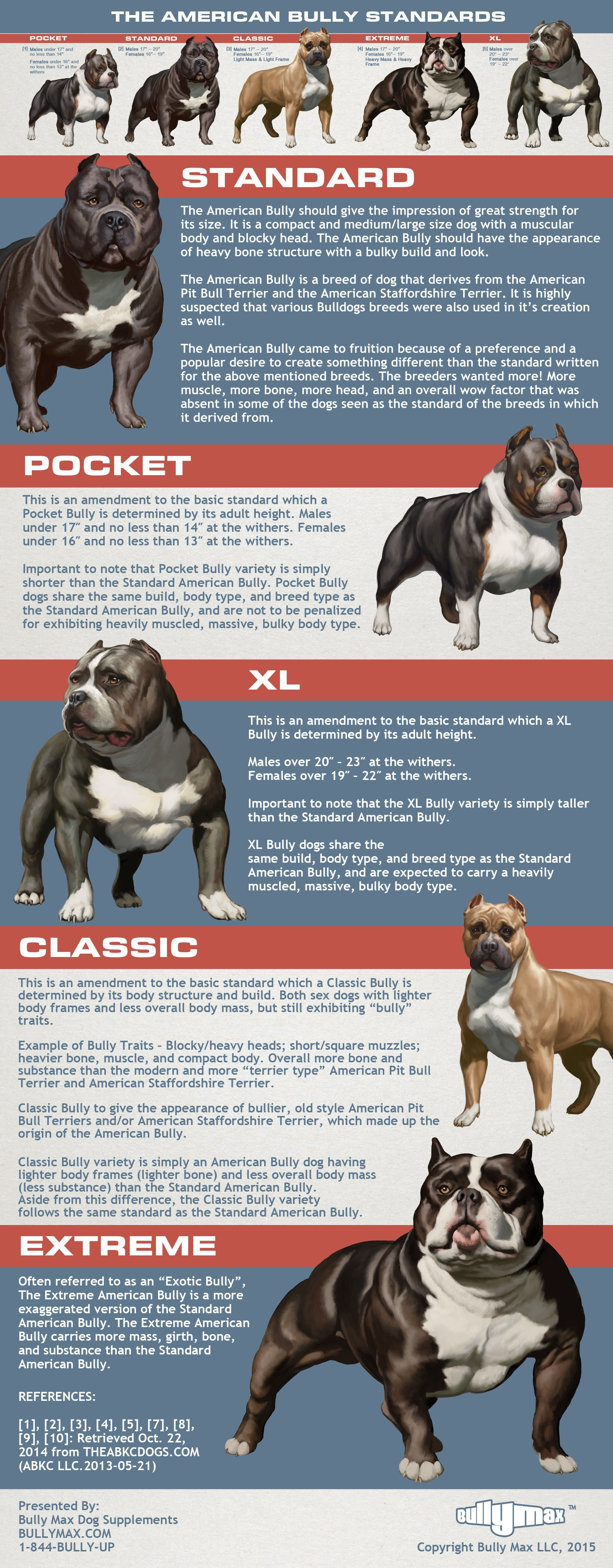 American Bully Standards Infographic Dog Breed Info Bully