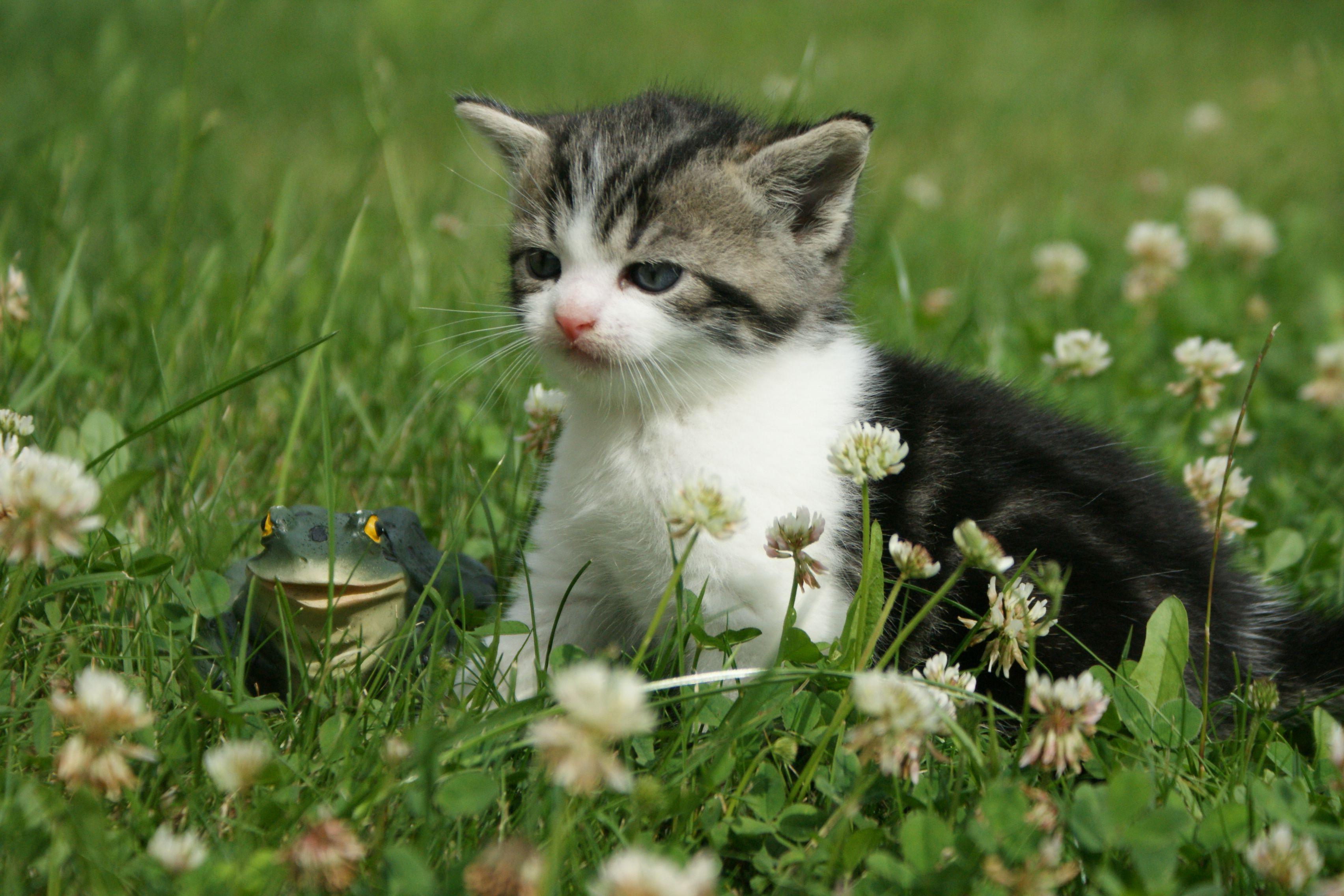 katzenbabys Süße Katzenbabys abzugeben Tierbörsen
