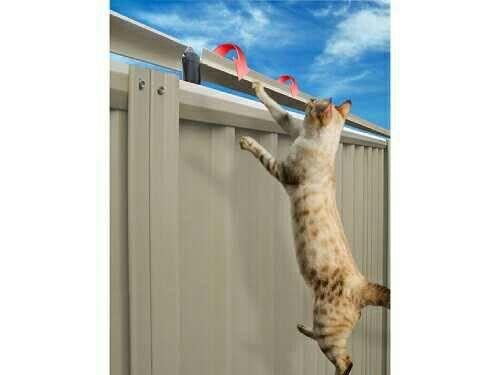 Oscillot Cat Fence Australia Cat Yard Amp Room Ideas