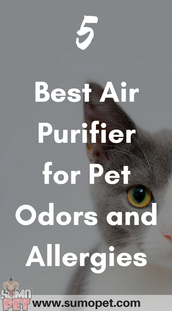 5 Best Air Purifier for Pet Odors and Allergies [2020