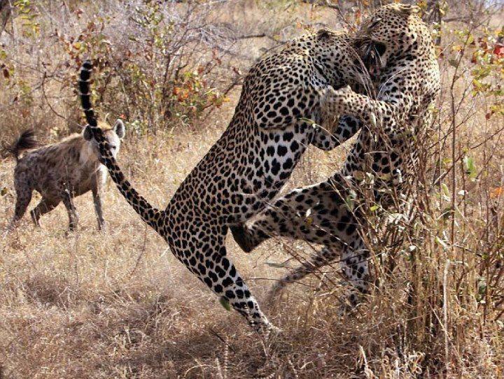 South african animals, Animals