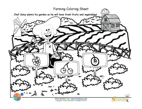 Free Life Cycle Of A Plant Coloring Page, Download Free Clip Art ... | 371x480