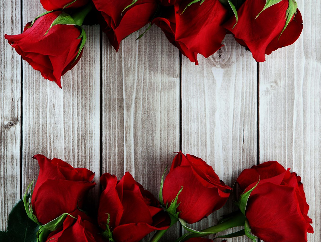 Wallpaper Red Roses Flowers Closeup Wood Planks Boards Roses Desktopwallpaper Wallpaper Valenti Red Roses Wallpaper Flower Background Wallpaper Red Flowers