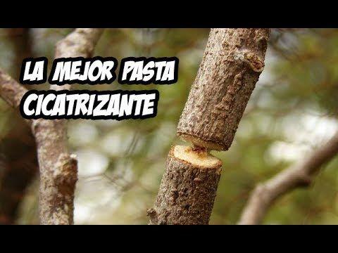 24 Ideas De Injertos Injertos De Plantas árboles Frutales Injertados Ingertos Frutales