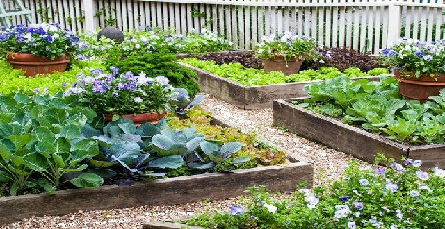 Small Home Vegetable Garden Design