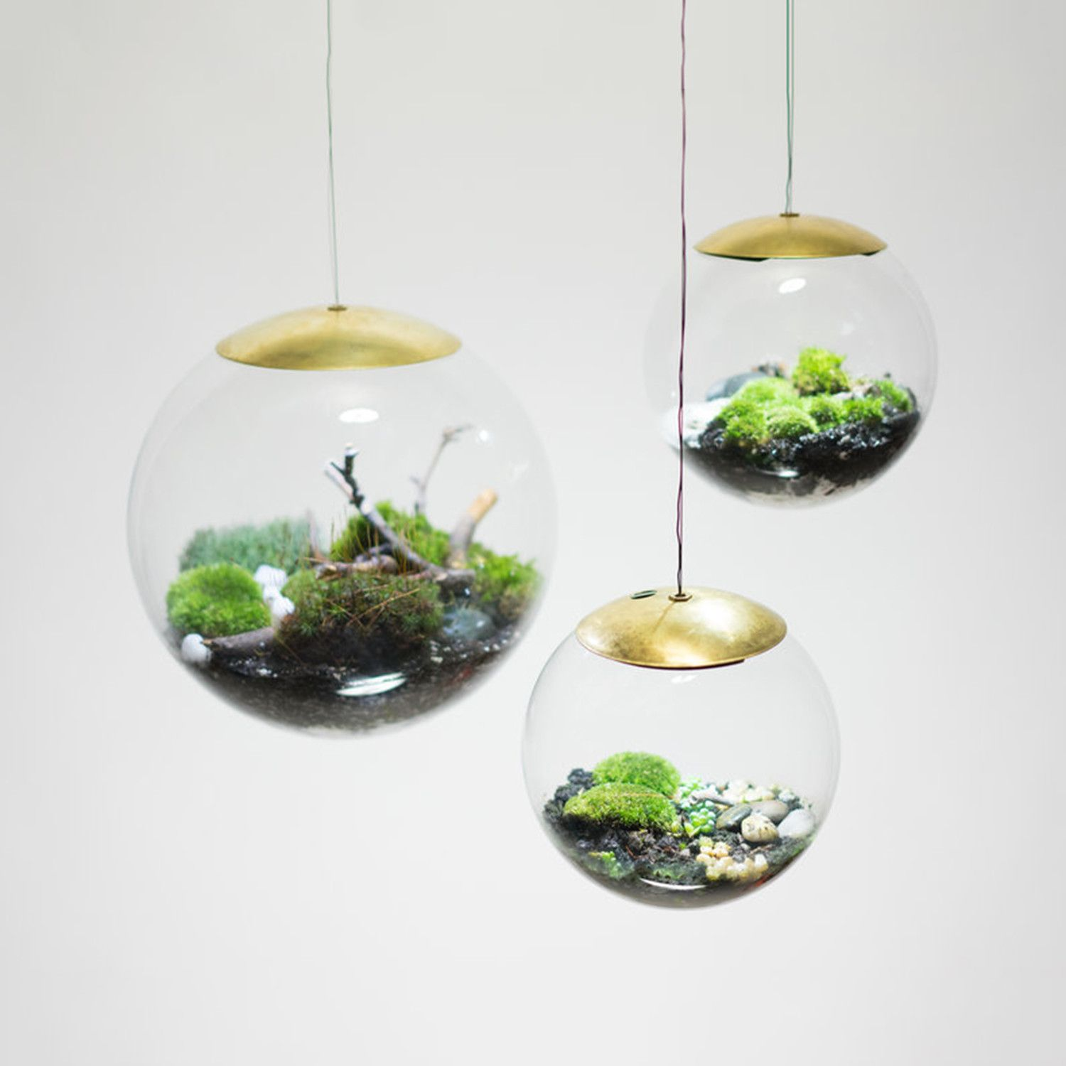 Globe suspended terrarium vintage home ideas pinterest