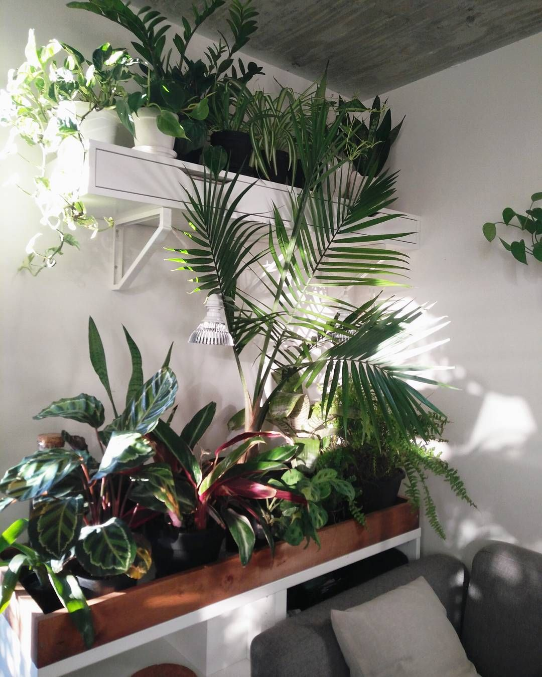 Buy home decorations online also pin by anita schm de illemann on decor indoor plants rh pinterest
