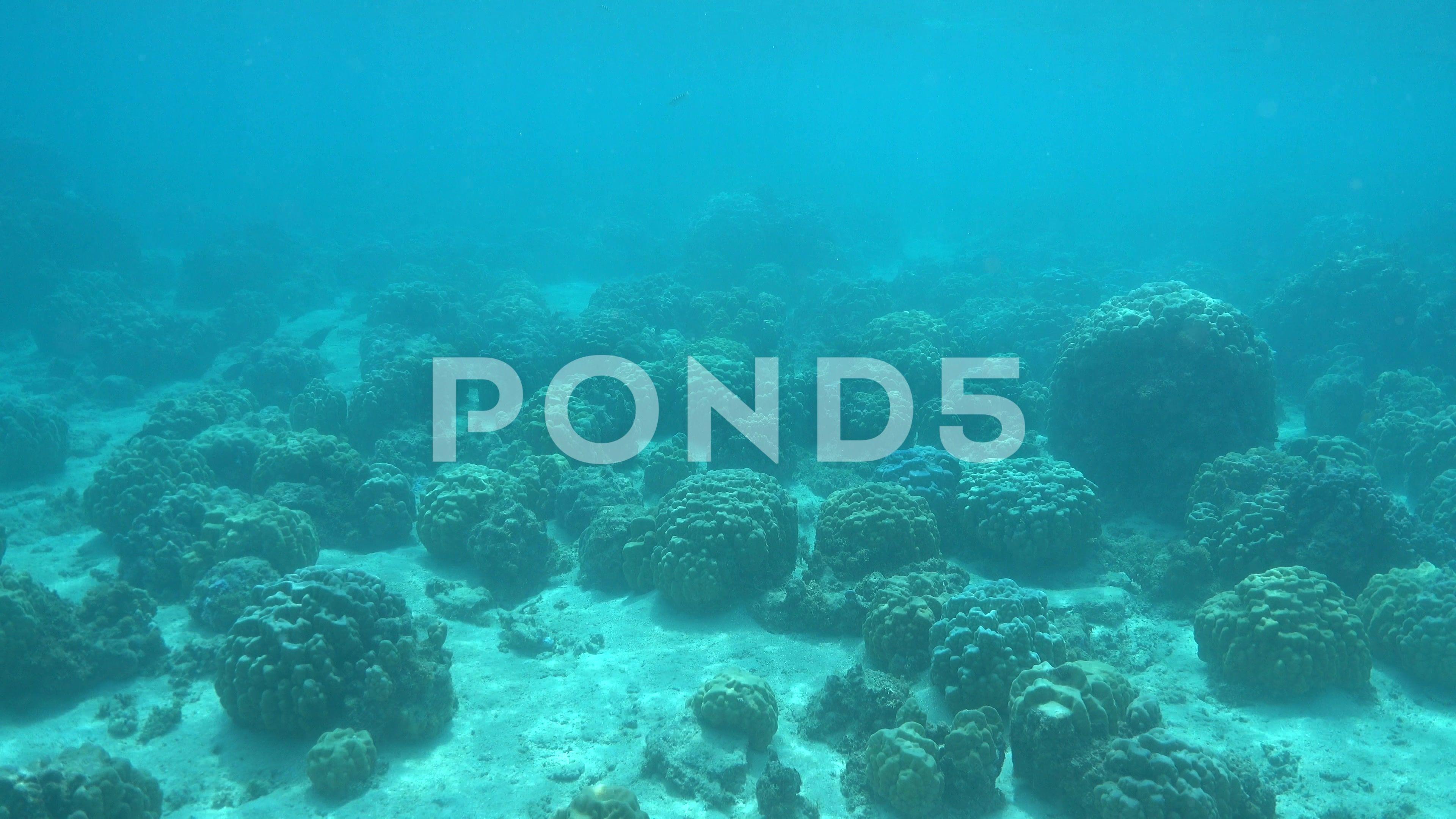 Underwater Landscape Ocean Floor With Coral Blocks Stock Footage Ocean Floor Underwater Landscape Ocean Underwater Landscape