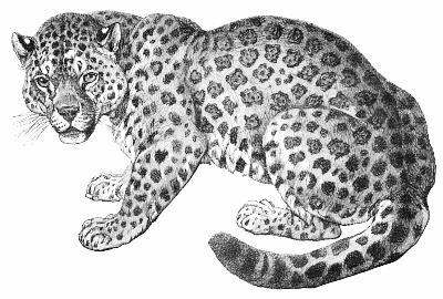 Free Jaguar Clipart 1 Page Of Public Domain Clip Art Jungle Coloring Pages Public Domain Clip Art Cat Coloring Page