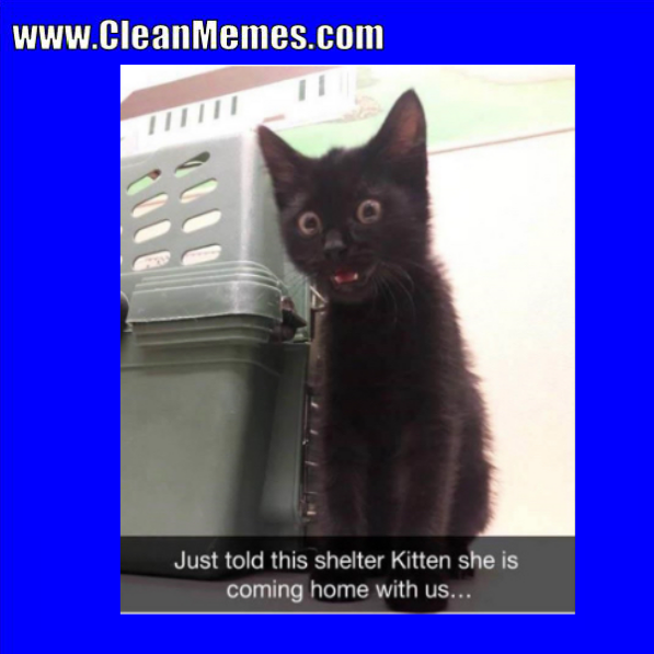 Clean Memes by Clean Memes Shelter kittens, Clean memes