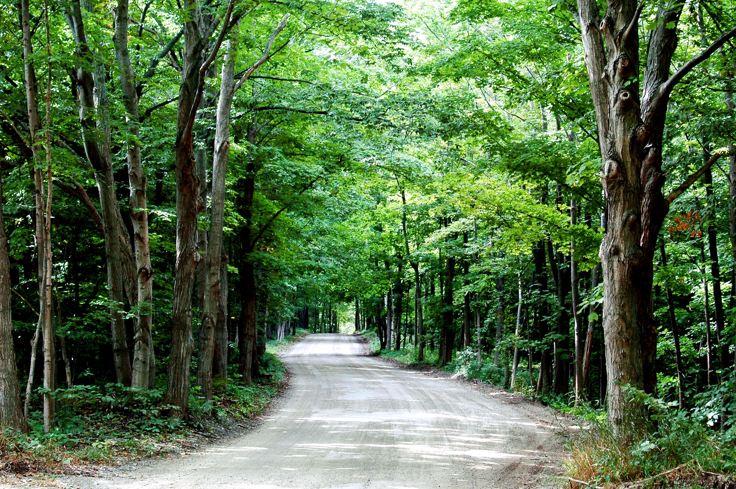 Take a back road..Northern Michigan | Fresh Air | Pinterest ...