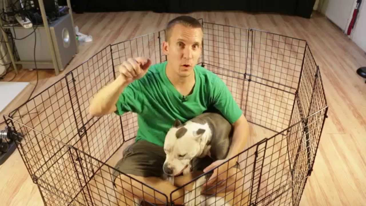 How To Build A Cheap Diy Temporary Dog Playpen With Images Dog