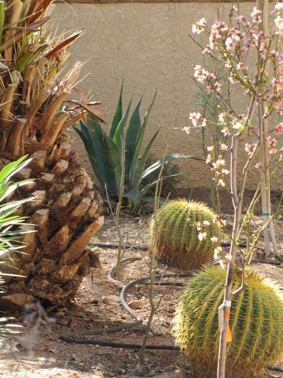 Home Landscape Design For The Beginning Gardner | Spanish Garden ...