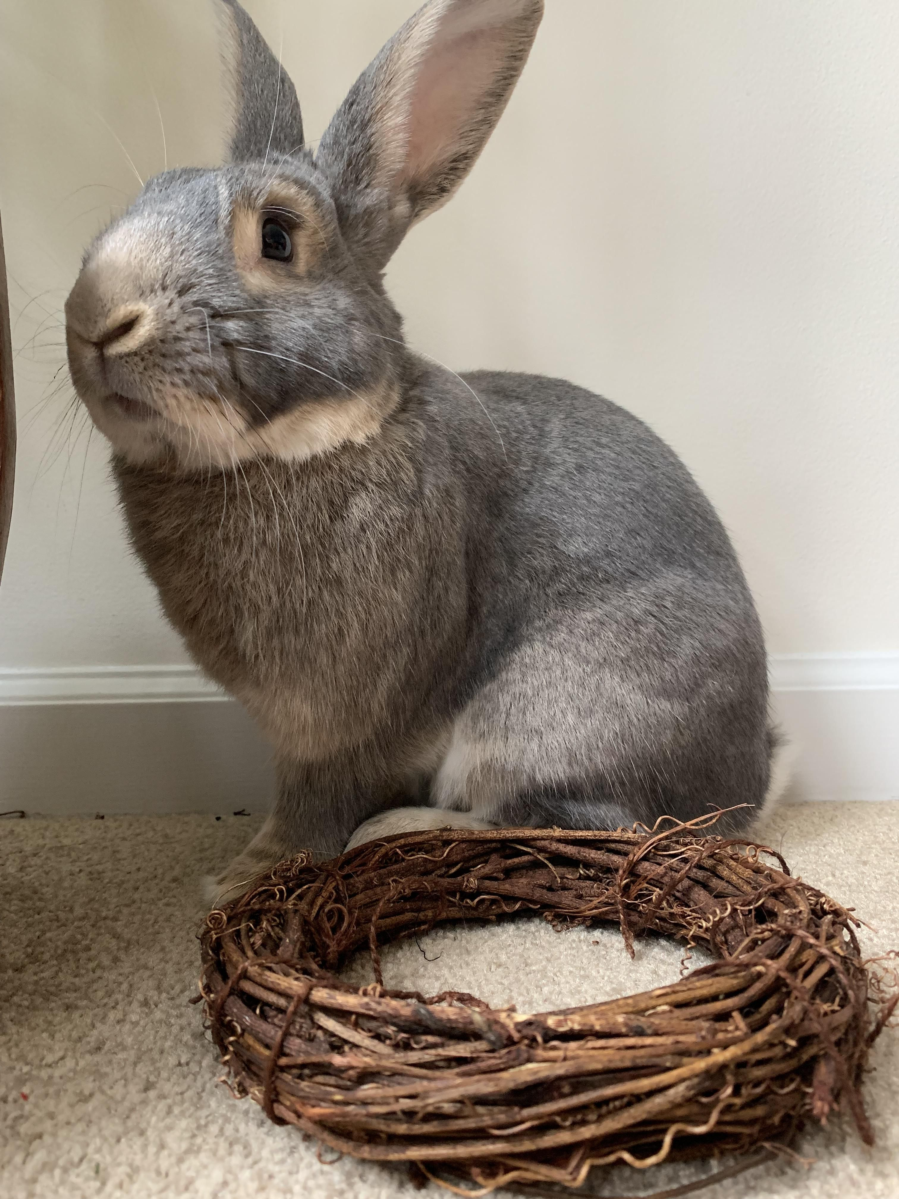 Do You Know These Facts About Rabbits In 2020 Rabbit Care