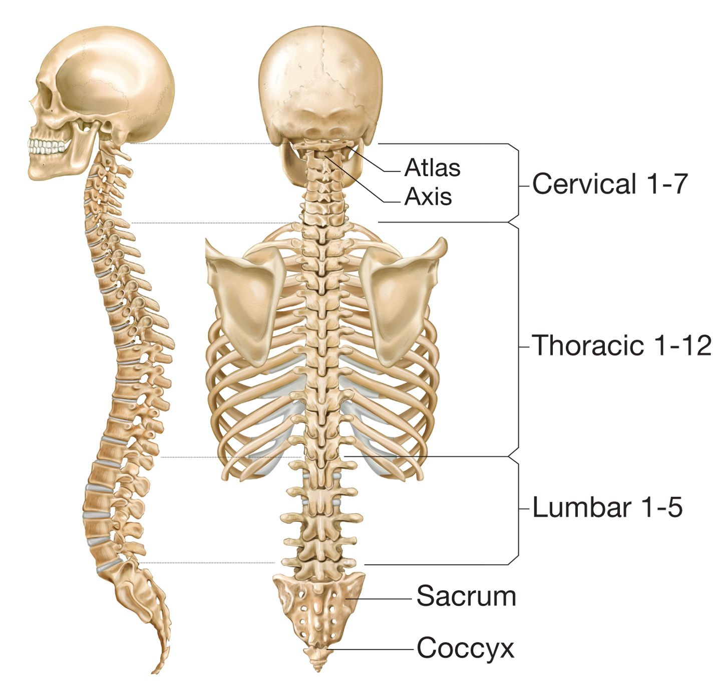 Spinal Fusion Natural A Ways To Treat