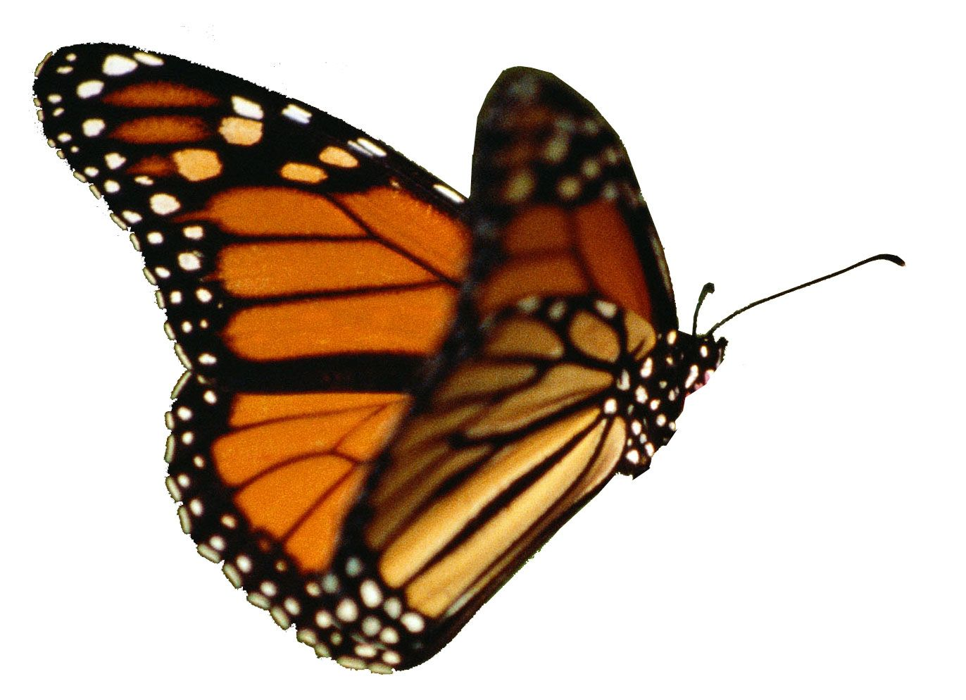 Can T Wait For Summer Butterfly Gif Butterfly Exhibit Flying Butterfly