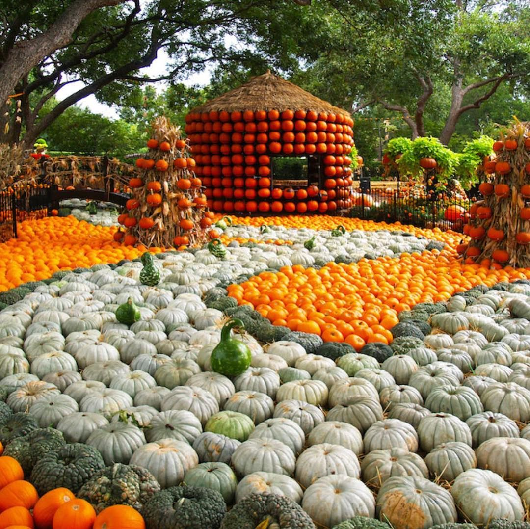 The Best Pumpkin Patches in Dallas Fort Worth to take your
