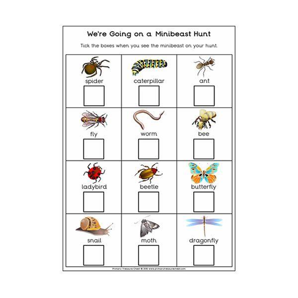 Minibeast hunt | Minibeasts, Teaching resources primary, Preschool ...