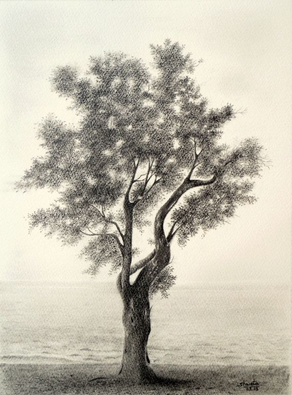 Tree pencil art olive tree pencil drawing