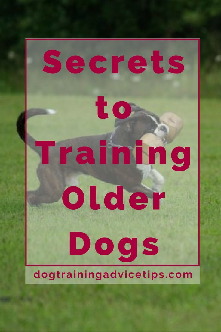 Secrets to training older dogs.