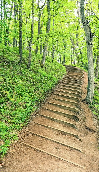 Empire Bluffs Trail Steps In Michigan by Dan Sproul