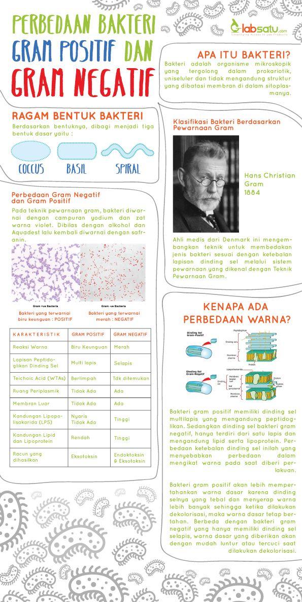 Perbedaan Bakteri Gram Positif dan Gram Negatif