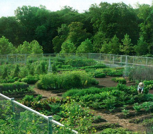 Planning The Garden Inspiration From Martha Stewart Living