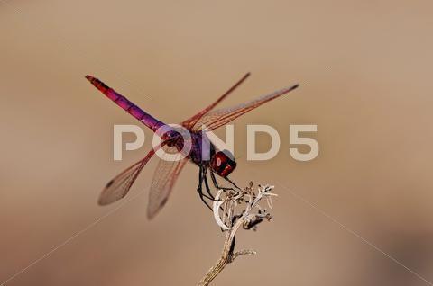 Dragonfly Stock Photos ,#Dragonfly#Stock#Photos