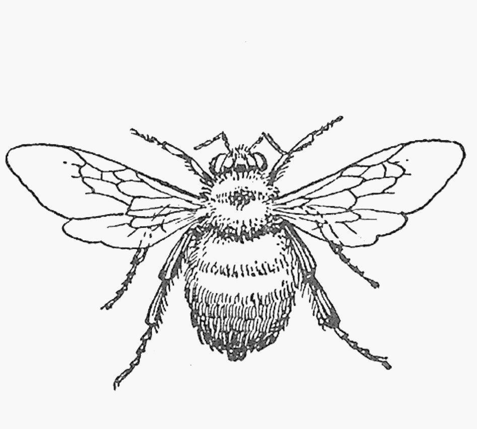 clipart french bee - photo #7