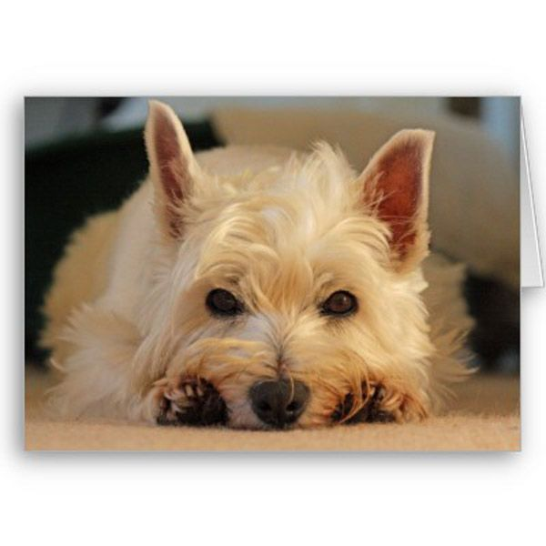 Happy Birthday Card Westie By Digitalwallpapers Stuff To Buy