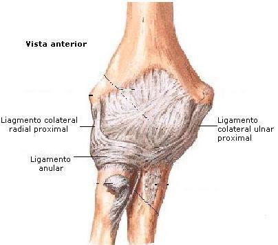 Arquivo Anatomia (apostila completa).doc enviado por Eugênio no ...