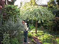 Boom Kleine Tuin : Bomen voor kleine tuin uniek modern city garden landscape