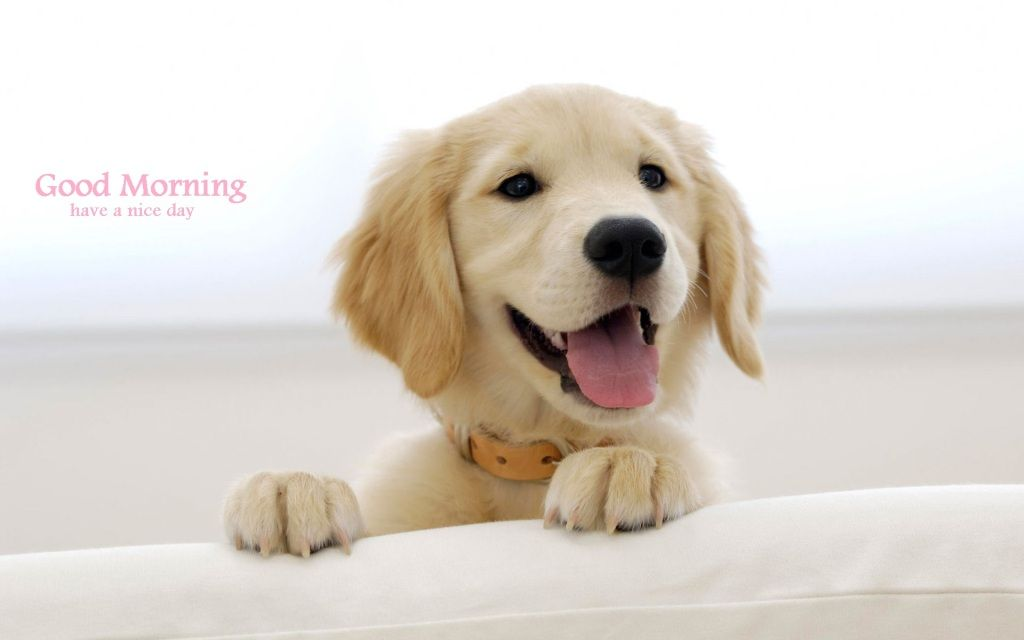 Good Morning Golden Retriever Images Retriever Puppy Puppies