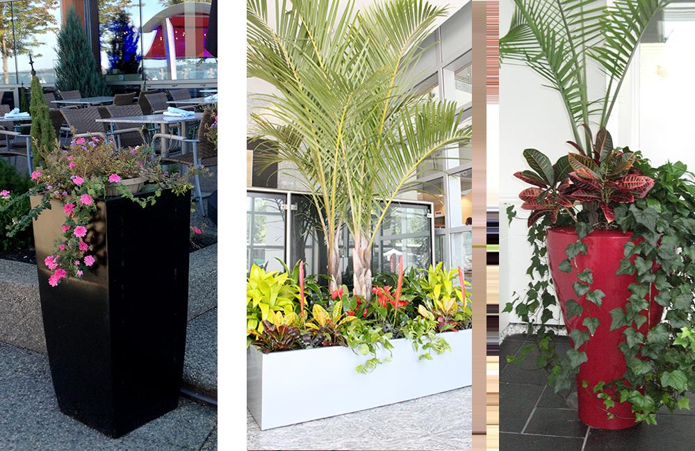 Greenville Planters | Large Pot Planters U2013 Landscape Design