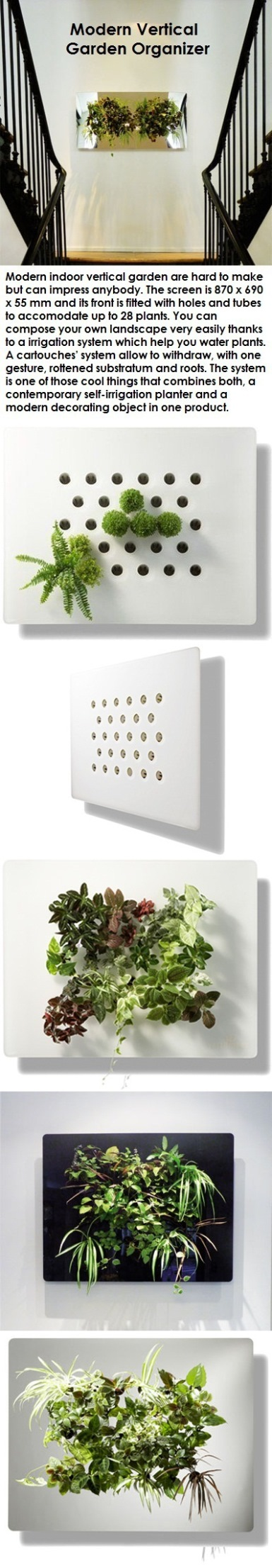 Modern indoor vertical garden are hard to make but can impress anybody.