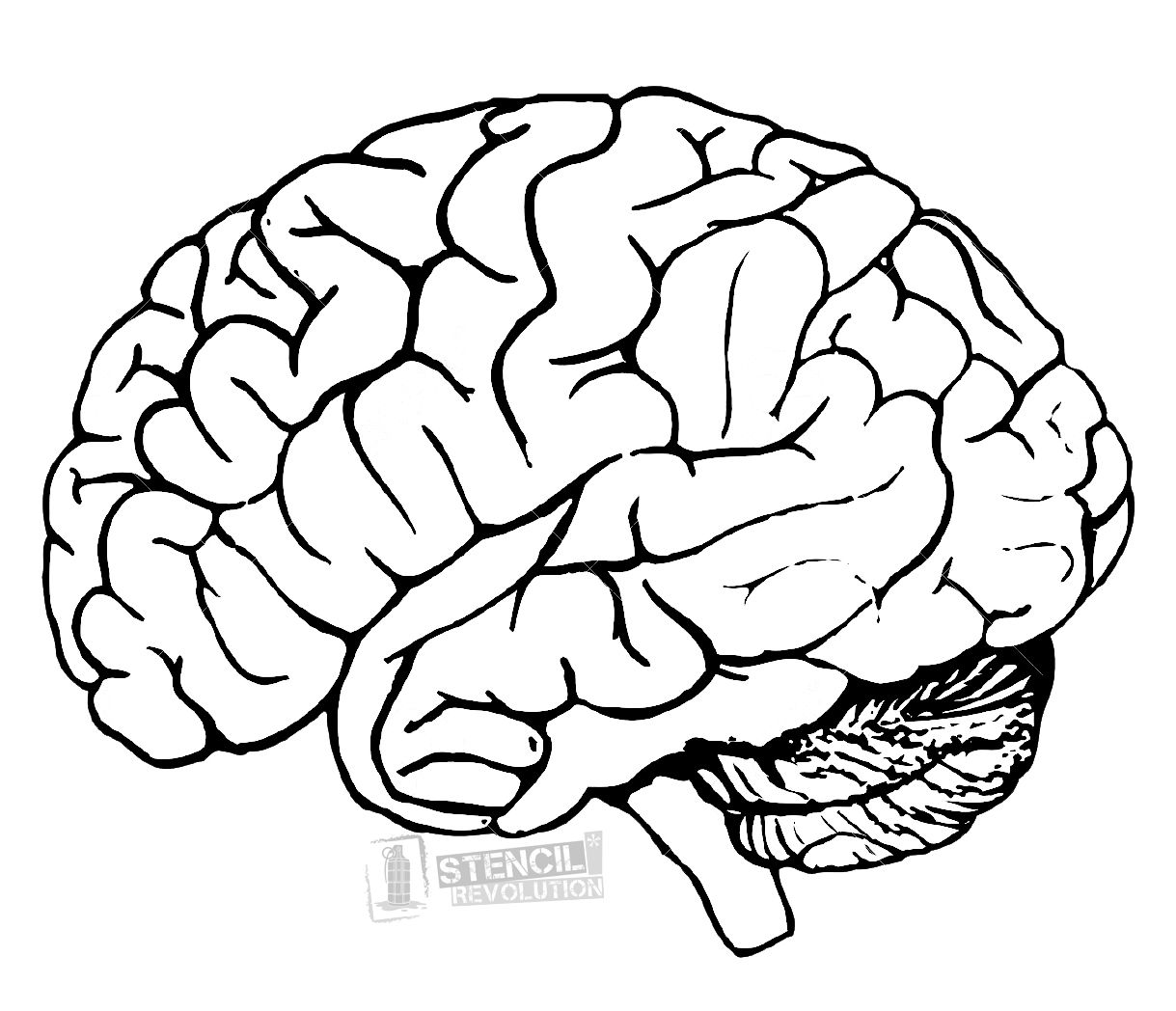 It's just a picture of Superb Printable Brain Template