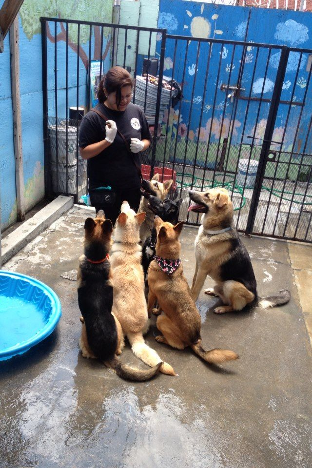 Are You Looking For Dog Friendly Dogs Here Is The Picture Of