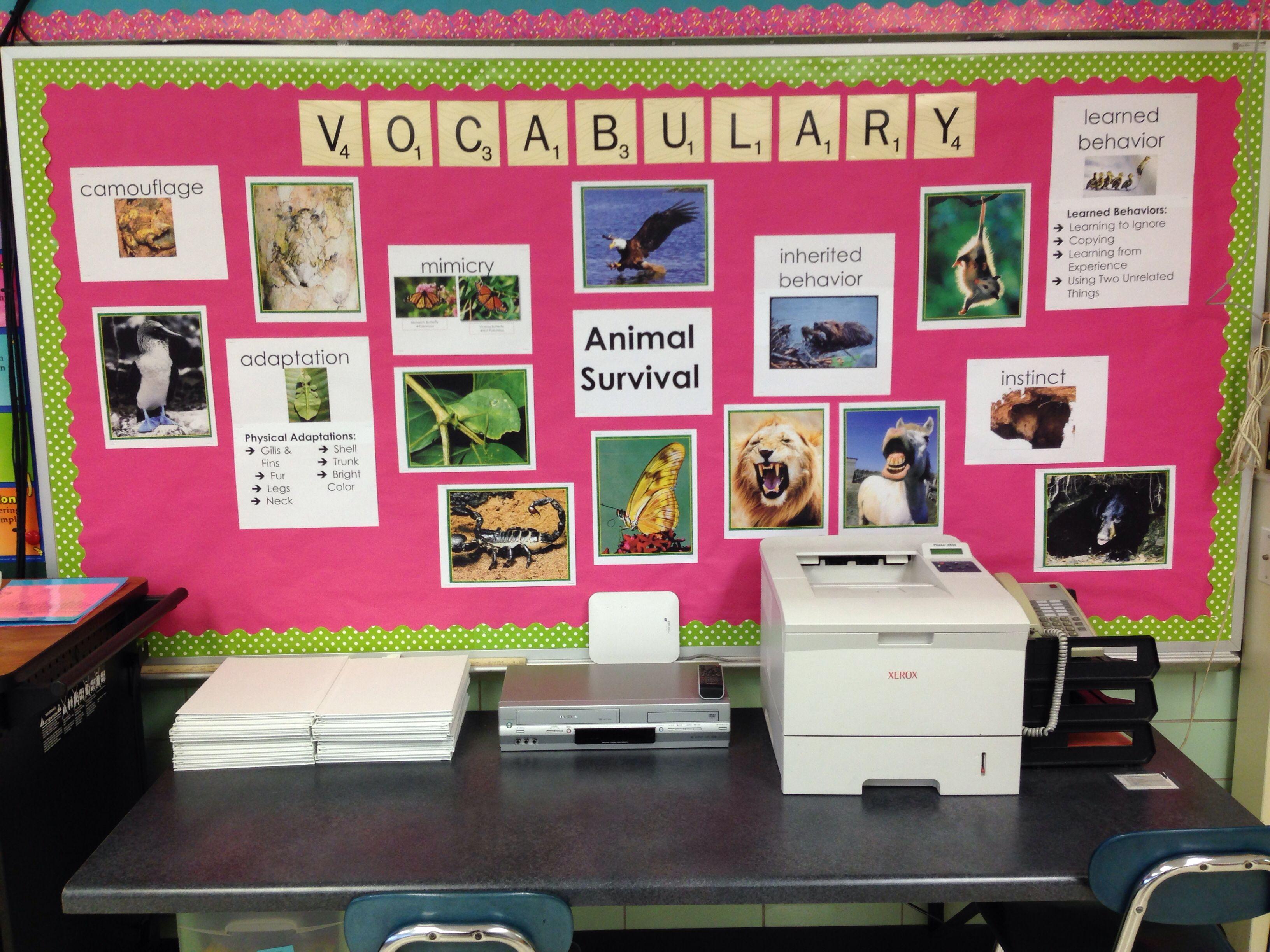 Animal Adaptations Vocabulary Bulletin Board