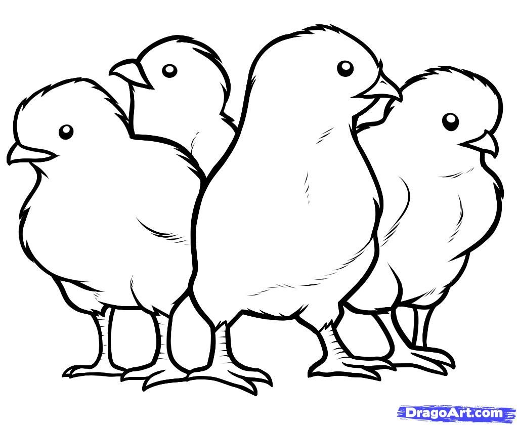 Printable Pictures of Baby Chicks | How to Draw Chicks, Chicks ...