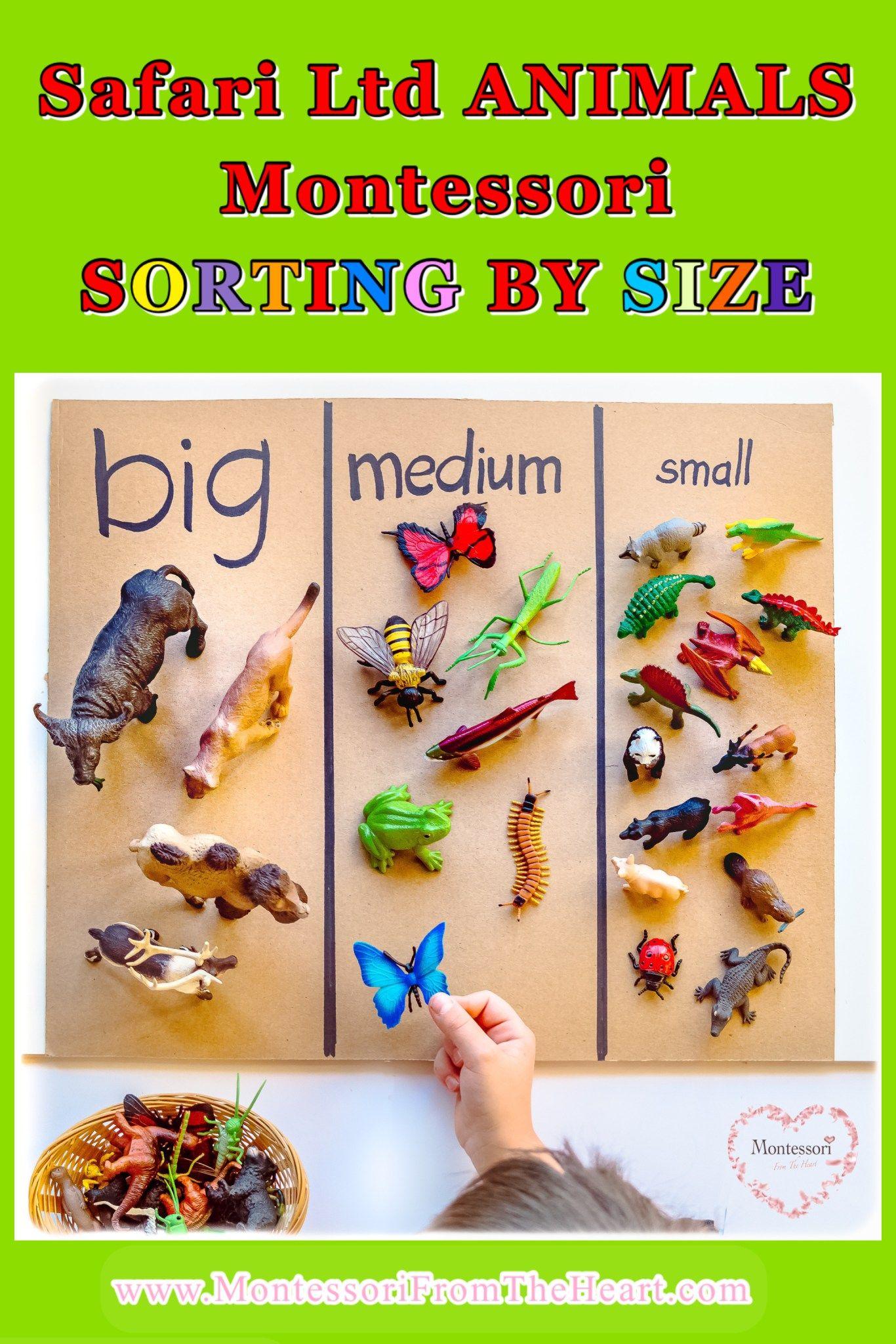 Safariltd Animal Size Sorting