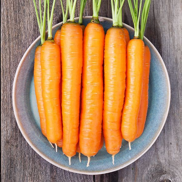 Napoli F1 Carrot Carrots Organic Vegetables Vegetables 400 x 300
