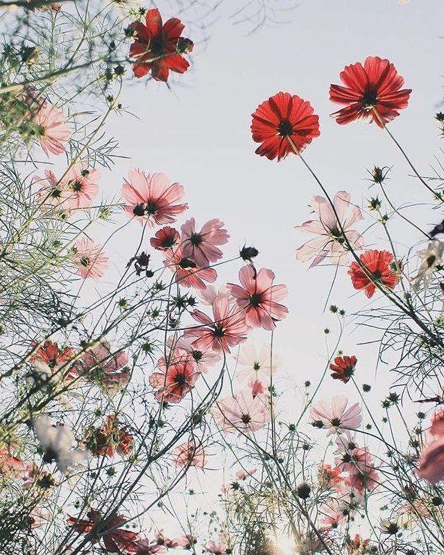 Pretty wild flowers, daisies, poppies #flowers #inspired #inspiration... amazing pretty wall...