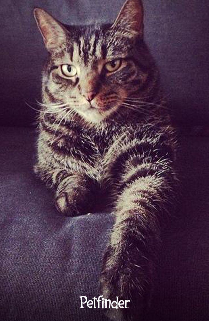 Ten Reasons Senior Cats Rule Cat Adoption Kitten Adoption Cats And Kittens