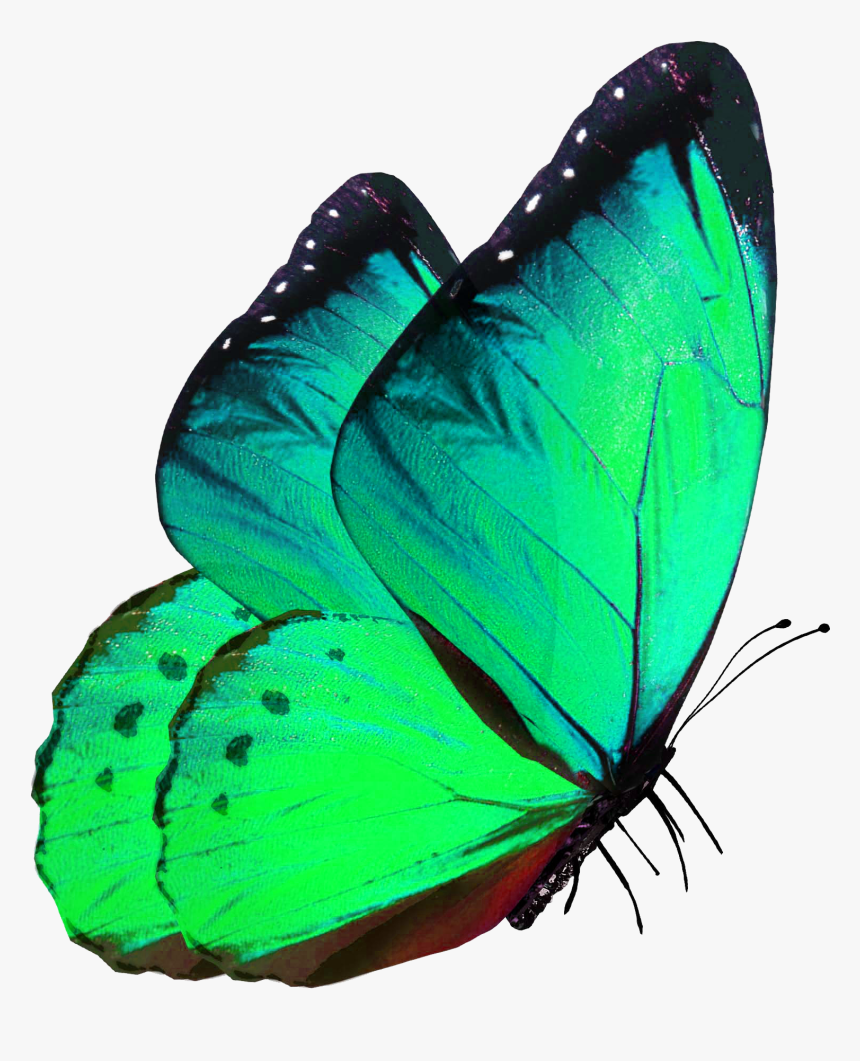 Google Image Result For Https Www Kindpng Com Picc M 138 1381683 Butterfly Png Green Butterfly Png For Editing Transparent Pn Green Butterfly Green Butterfly