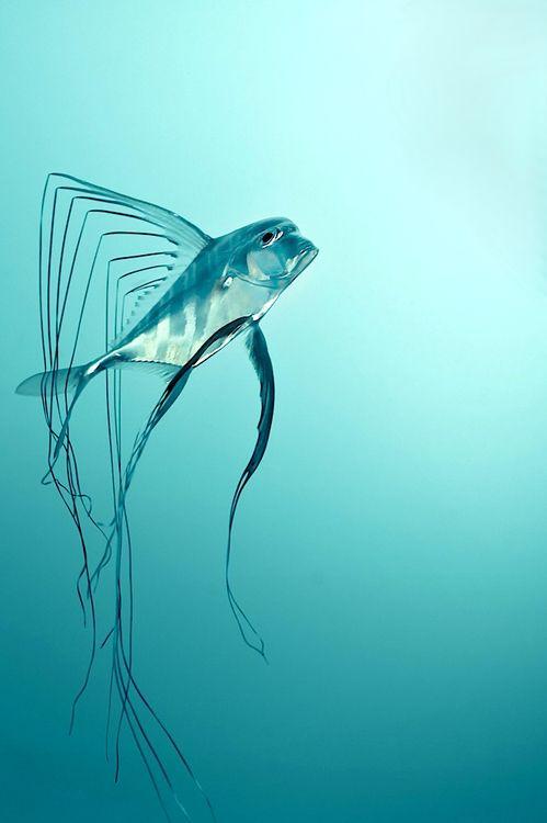 fish   Very cool photo blog