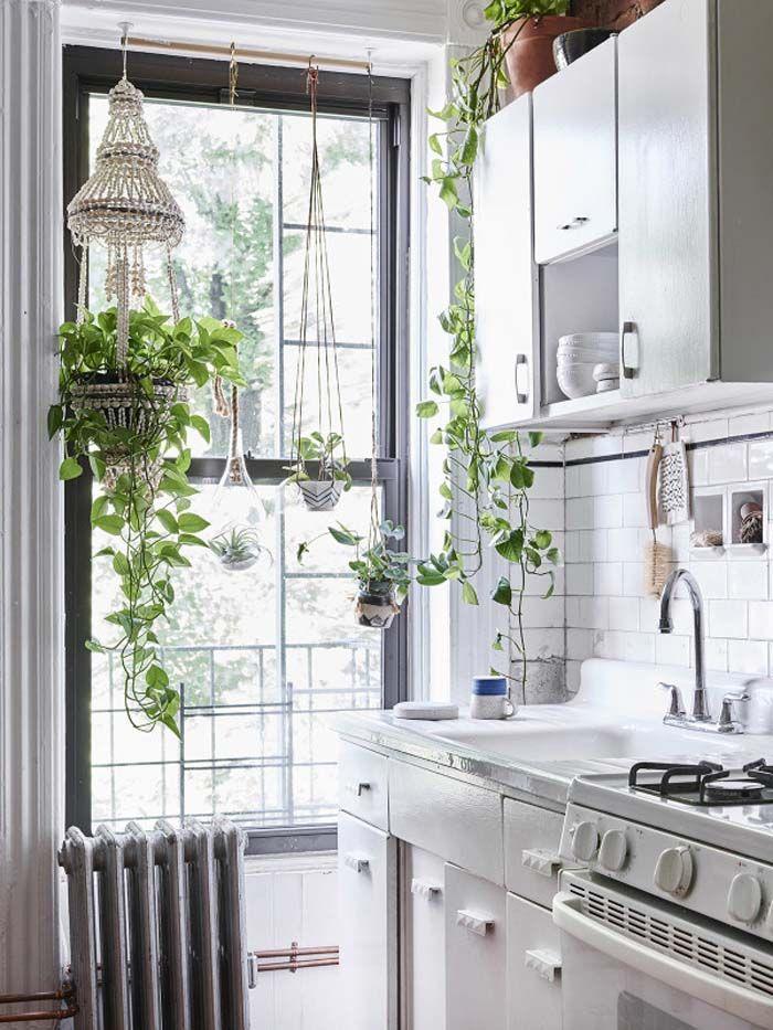 HOME meravigliose piante in cucina! | Interior | Pinterest ...
