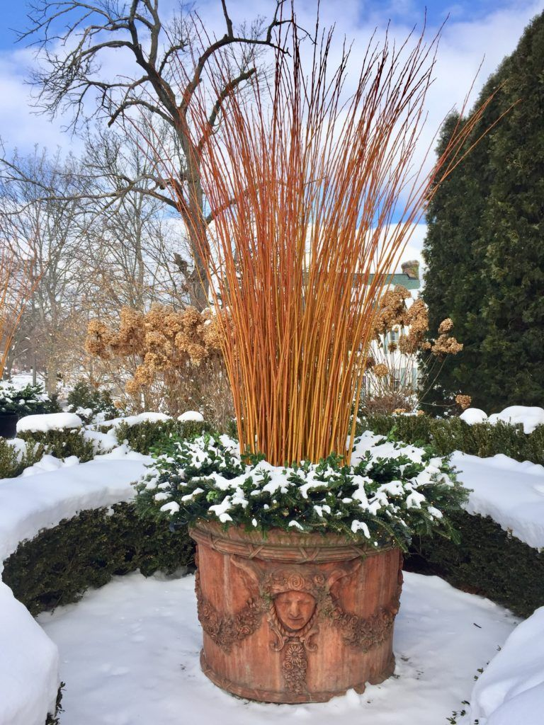 Snow Glow | Dirt Simple | Gardens / Patio / Arbors / Sunrooms / Urns ...